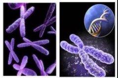 免疫中心能帮多次移植胚胎不着床或反复流产患者怀上孕,怀好孕!