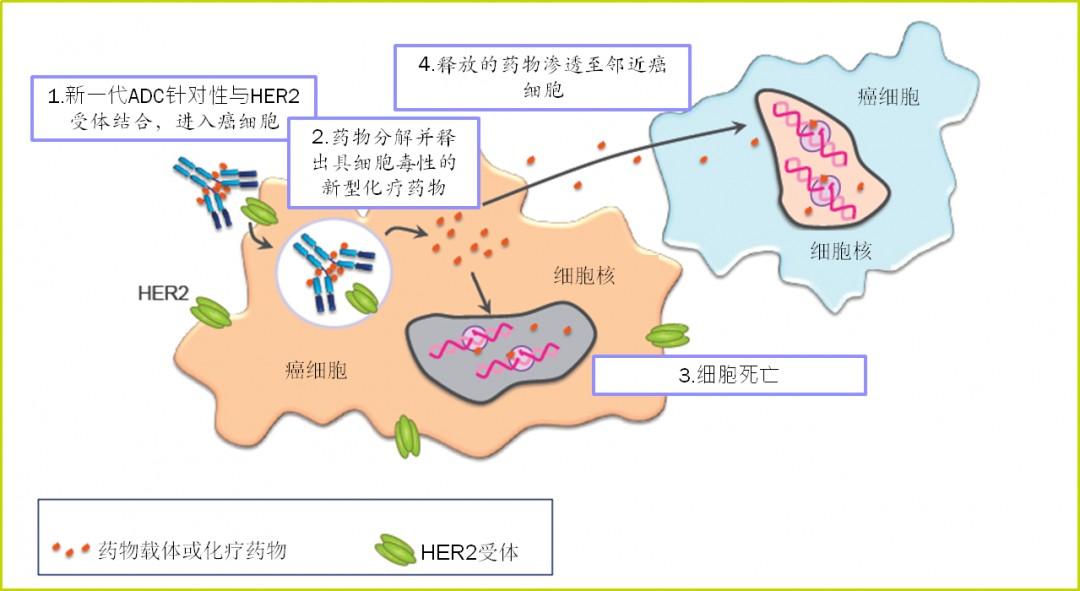 """新一代""""生物导弹""""成抗癌新方向 HER2型乳腺癌患者迎福音"""